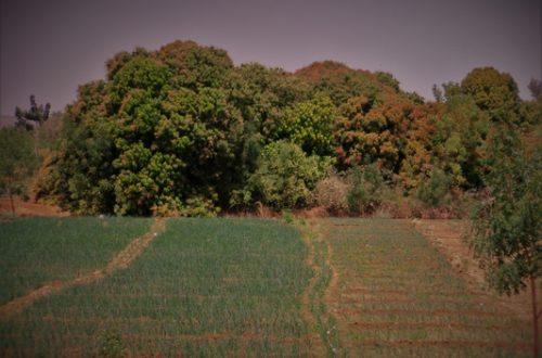 Article : Niger : pourquoi céder 120 000 hectares de terres cultivables à l'Arabie saoudite ?